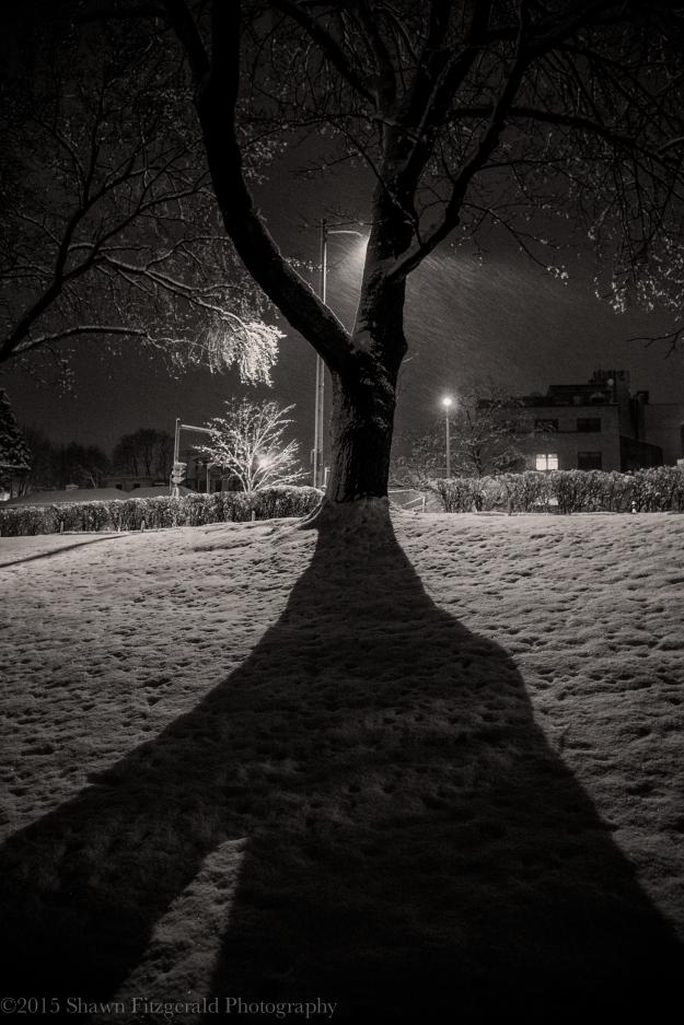 Winter012415-1