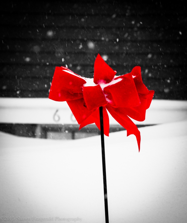 Winter012715-1
