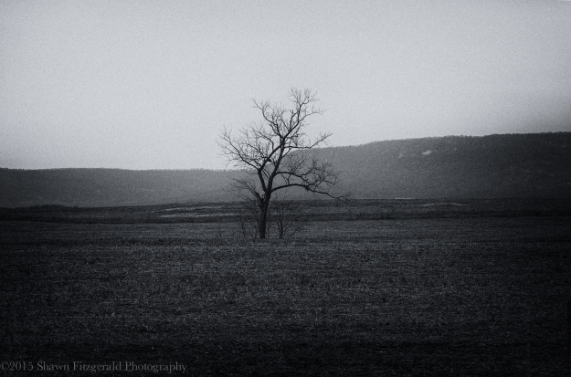 Tree_One-1