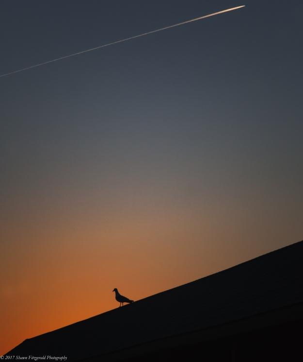 Sept17Twilight -2