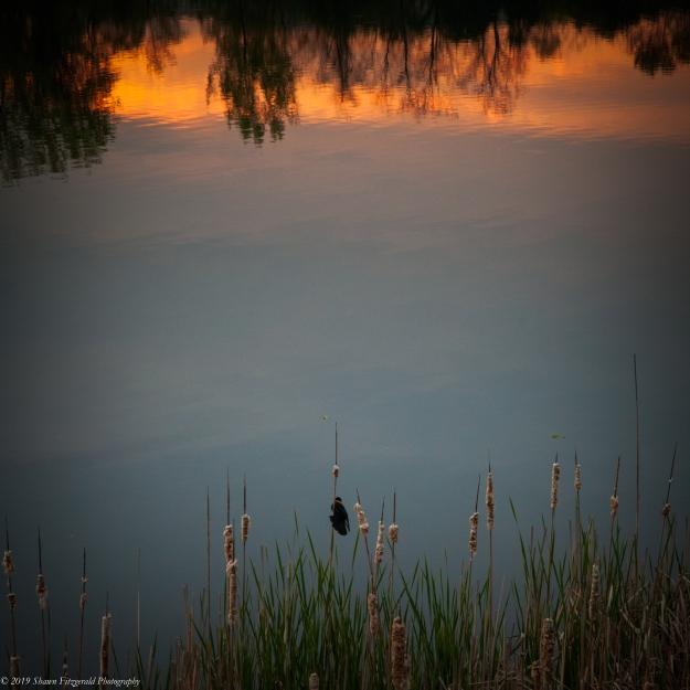 Ell Pond 05.17.19-2