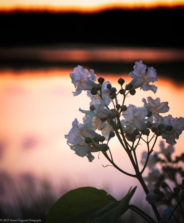 Flower 062219-1