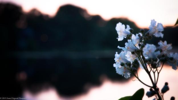Flower 062219-2