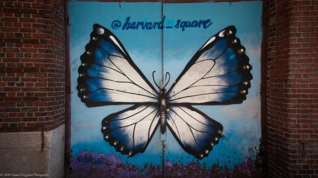 HarvardSquare0820-2